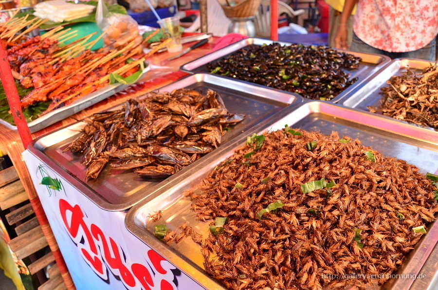 Roasted insects