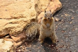 Posing Squirrel