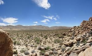 Joshua Tree Park Partial Panorama